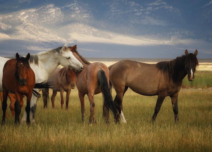 Wild horses peacefully graze at sunset.