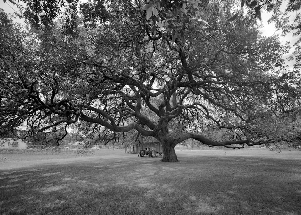 Oak Tree, Frobese House, Cuero, Texas Photography Art | Rick Gardner Photography