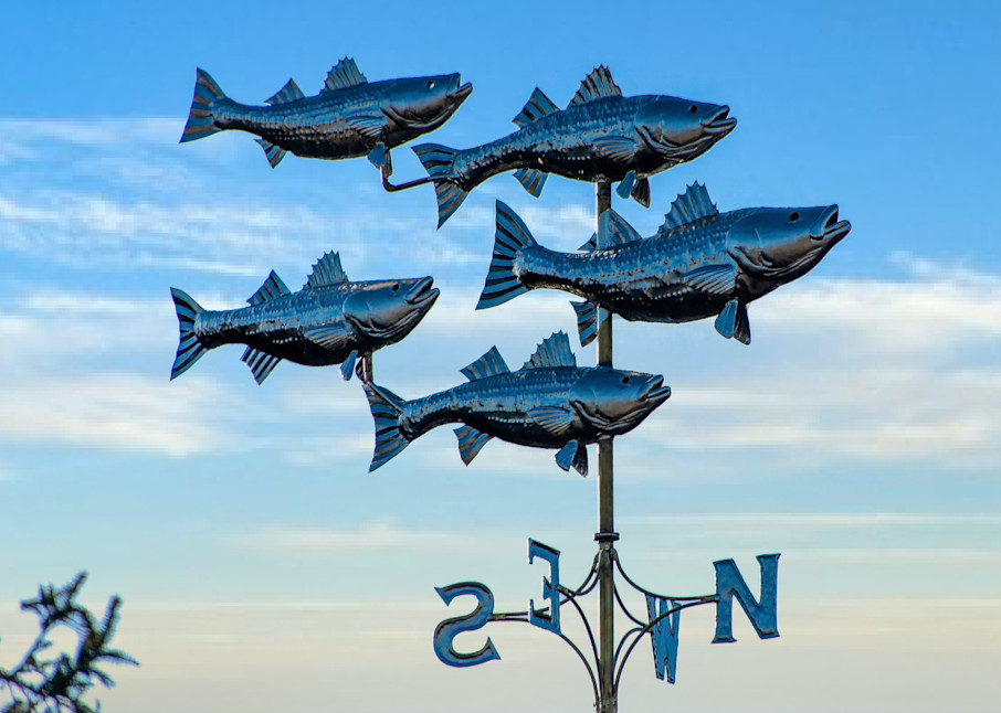 School Of Stripers Photography Art | The Colors of Chatham