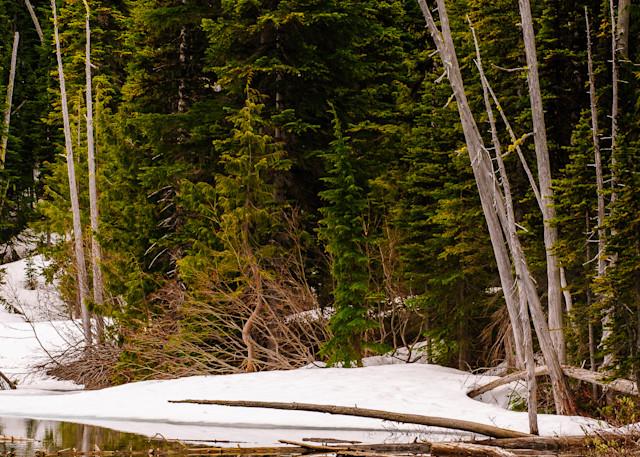 Early Spring Forest, Crystal Lake, Mount Rainier National Park, Washington, 2016