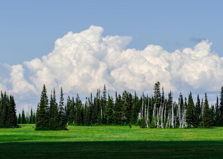 Forest at Grand Park, Mount Rainier National Park, Washington, 2016