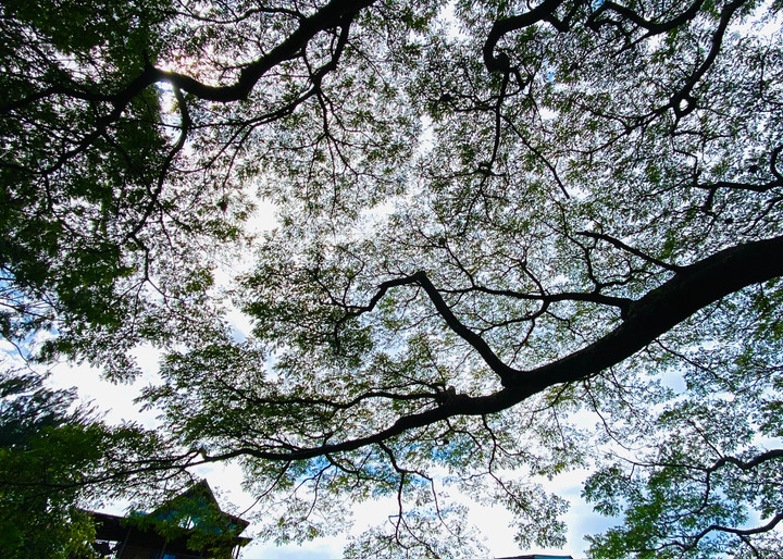 Tree Song Photography Art | Visionary Adventures, LLC