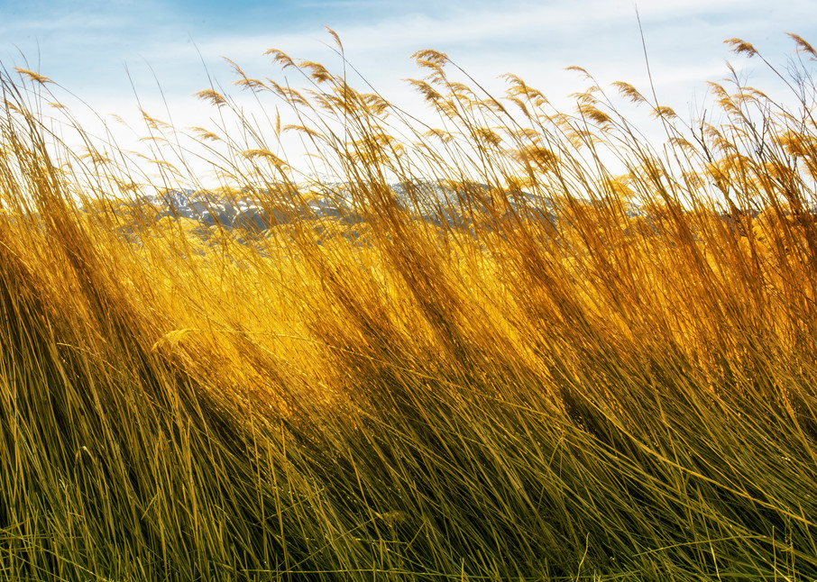 Grass Photography Art | Felice Willat Photography