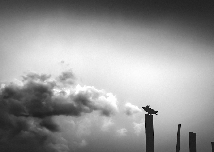 Ravens On A Post In The American Southwest. Photography Art   Rinenbach Photography