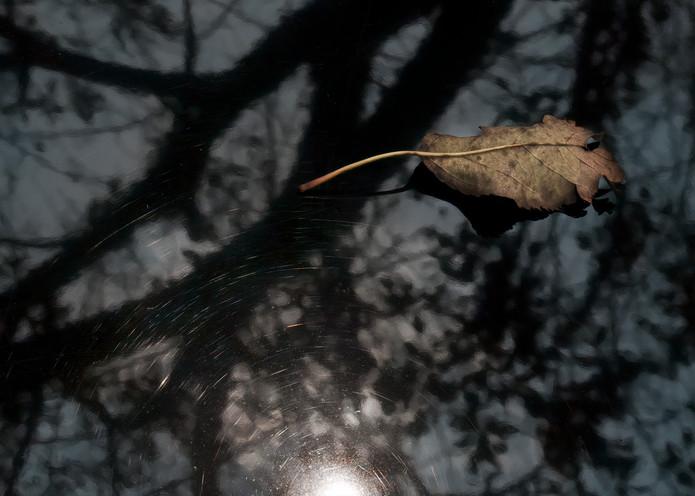 Winter Respite Photography Art | Ed Sancious - Stillness In Change