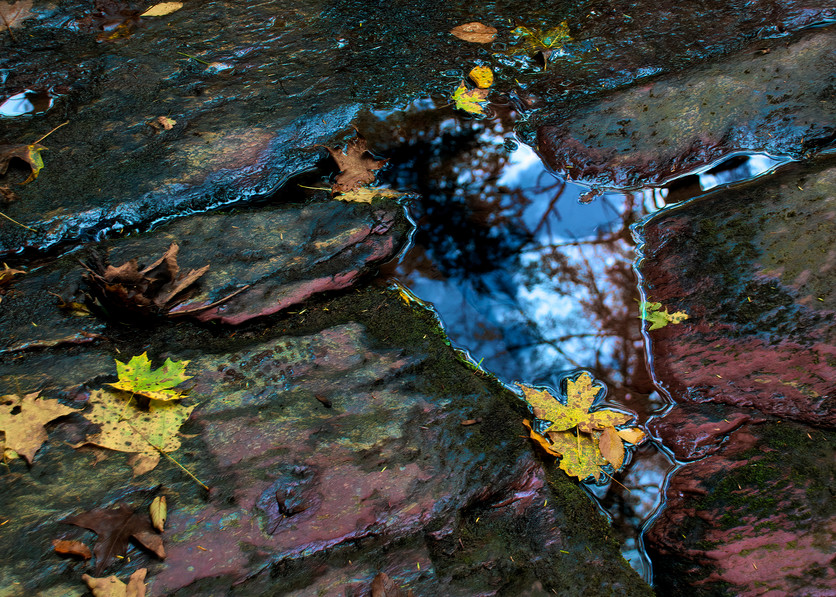 Winter's Onset Photography Art | Ed Sancious - Stillness In Change