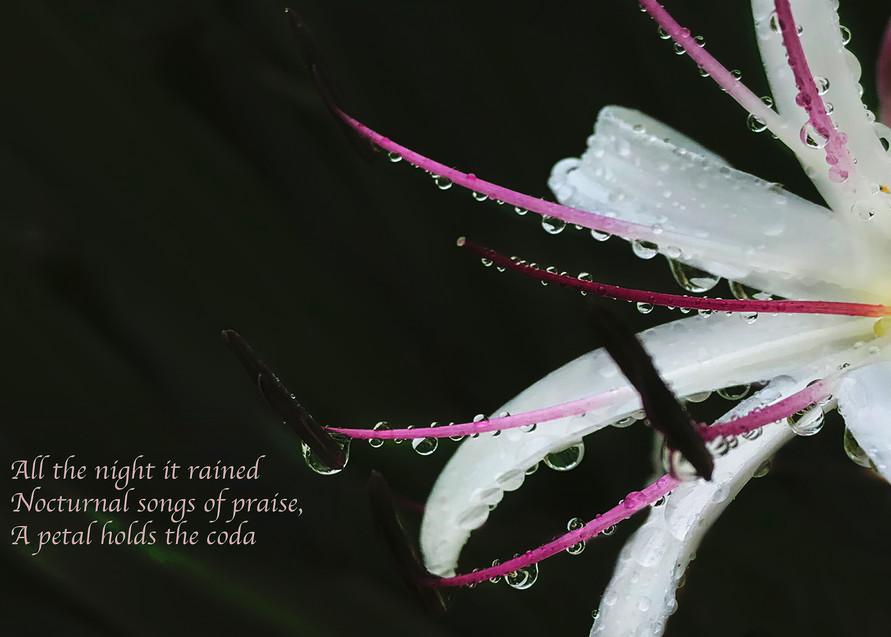 Petal Coda Photography Art | Ed Sancious - Stillness In Change