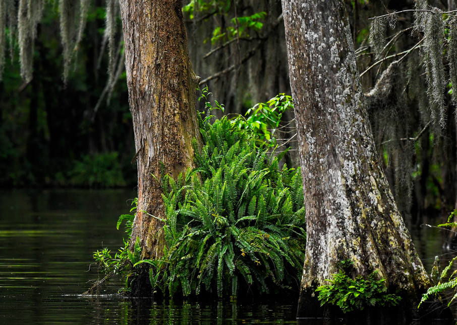 Lost in the Florida Swamp - Florida fine-art photography prints