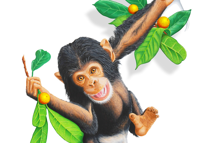 Baby Chimpanzee Art   Randy Johnson Art and Photography