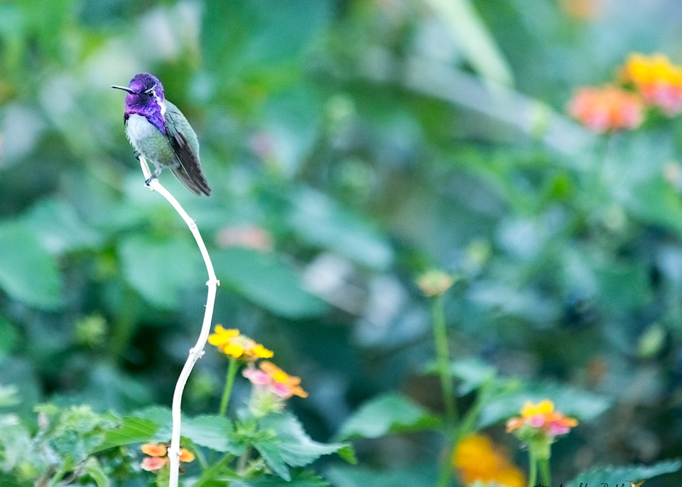 Resting Photography Art | Mindy Fine Art Photography