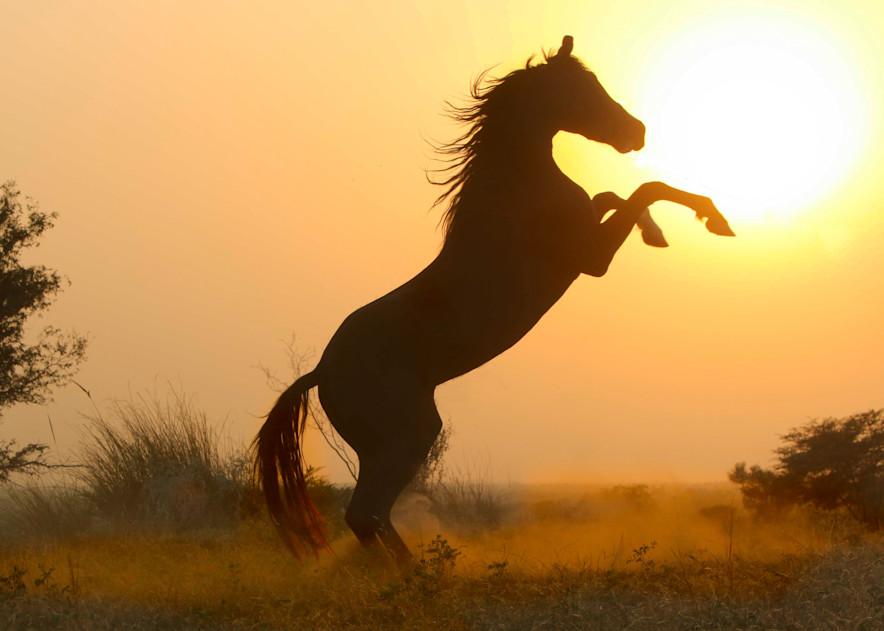 Dramatic black stallion silhouette