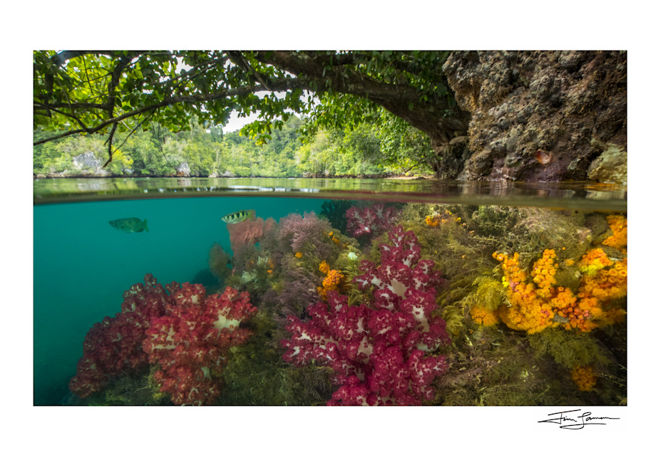 Reef Meets Rainforest Split Photograph for your home.