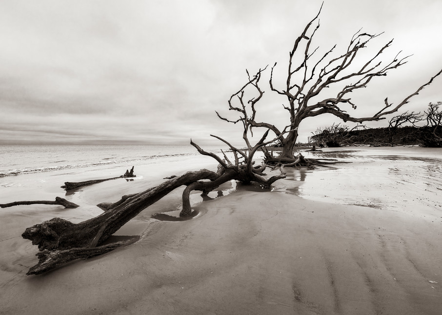 Jekyll Island Boneyard - Driftwood Beach fine-art photography prints