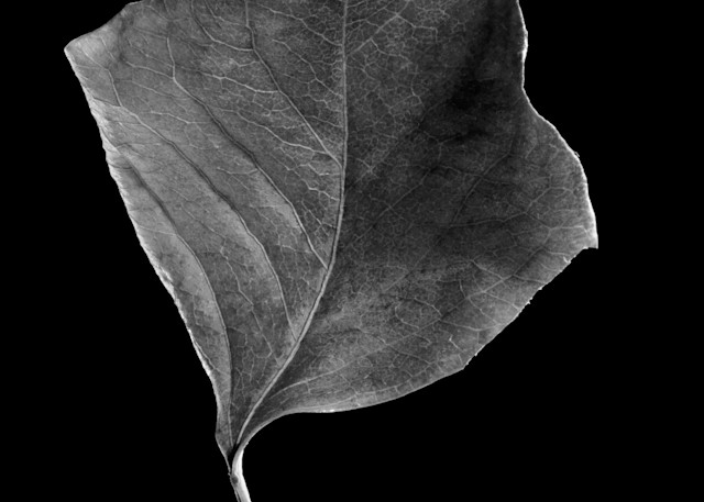 Chinese Tallow Lea Photography Art | Rick Gardner Photography