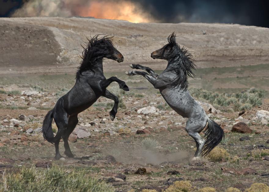 Black And Grey Fury  Photography Art   Great Wildlife Photos, LLC