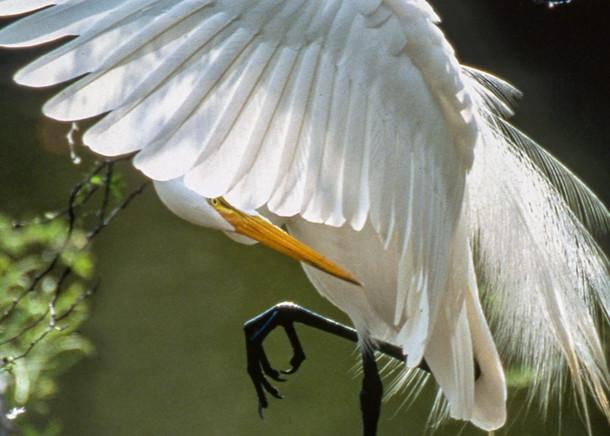 Nature's Ballet Photography Art | Great Wildlife Photos, LLC