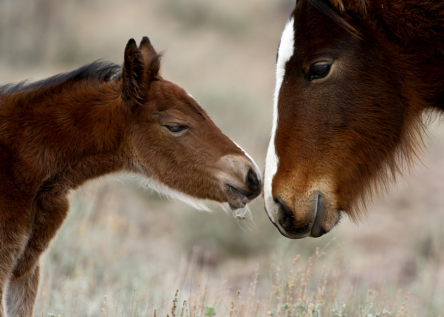 Newborns First Touch Photography Art   Great Wildlife Photos, LLC