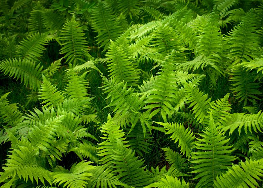 Woodland Ferns Photography Art | Rick Gardner Photography