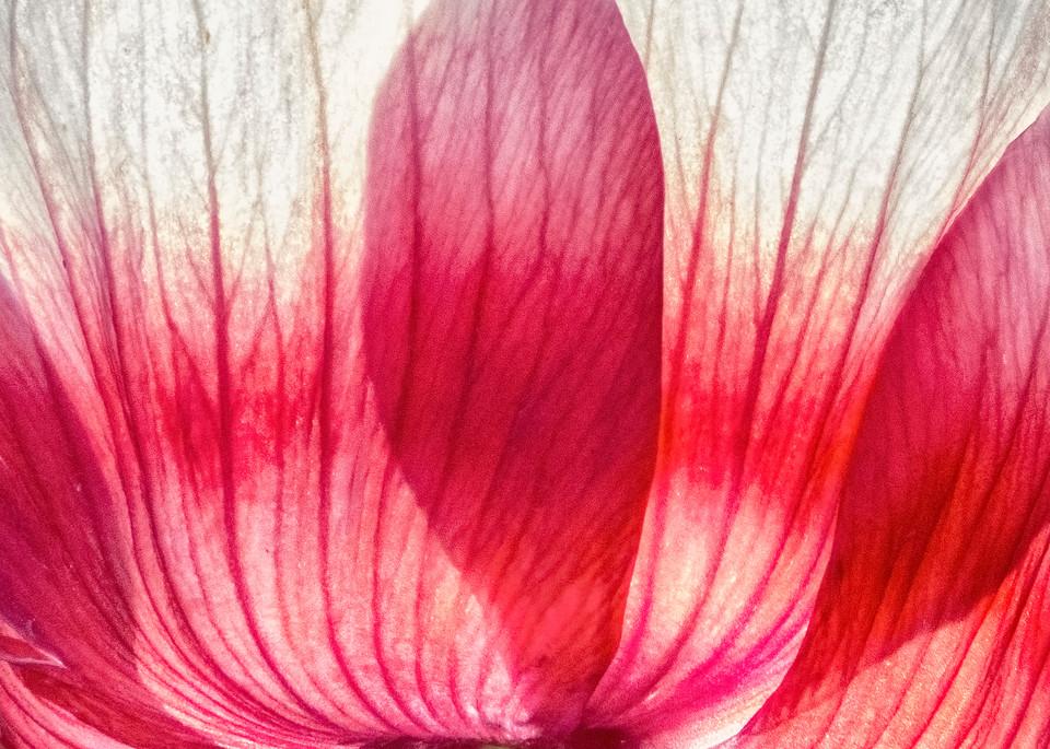 Petals Photography Art | Mindy Fine Art Photography