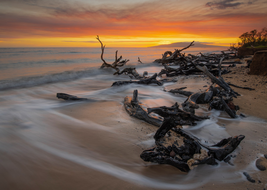 Enchanted Forest By The Sea Photography Art | Douglas Hoffman Photography