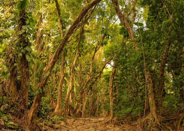 Enchanted Forest Photography Art | Douglas Hoffman Photography