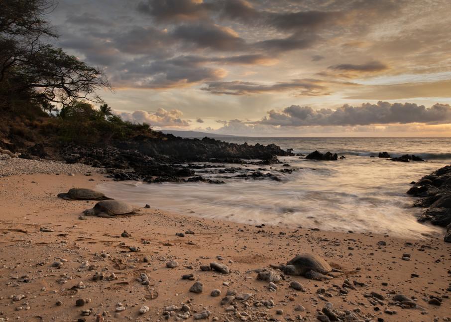 Honu Sunset Photography Art | Douglas Hoffman Photography