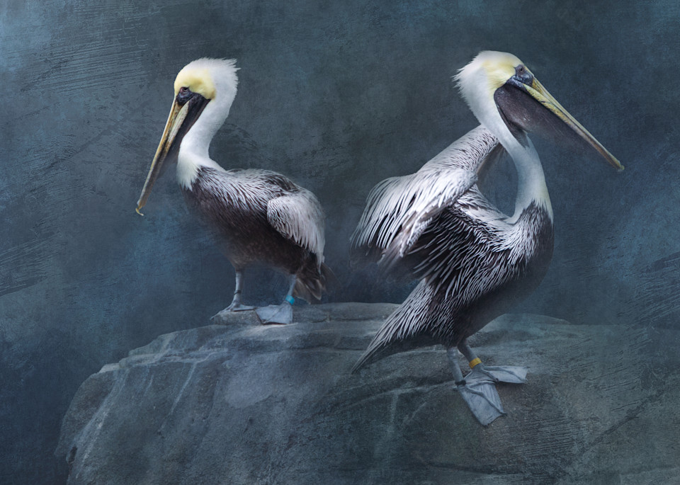 Brown Pelicans on Textured Background