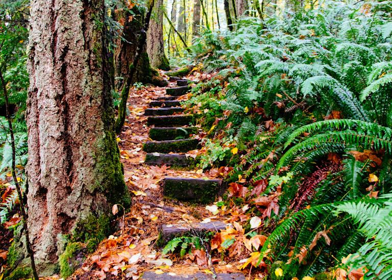 Tilikum Forest 2017