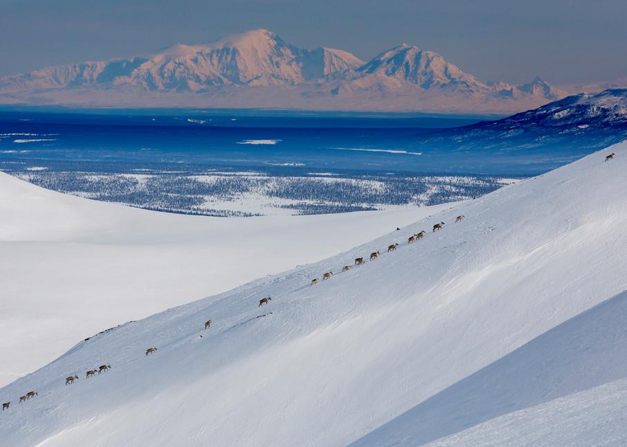 Caribou Line