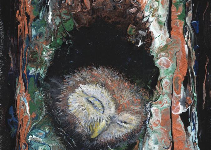 Sleepy Owlet 2 Art | lisaabbott