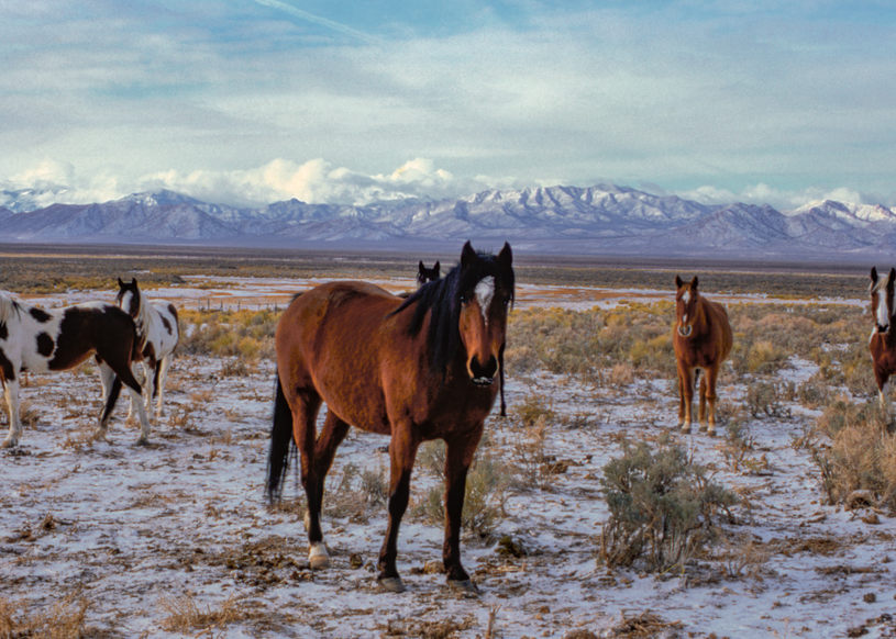Wild Horse Of The White River Valley, Nevada Photography Art | Craig Primas Photography