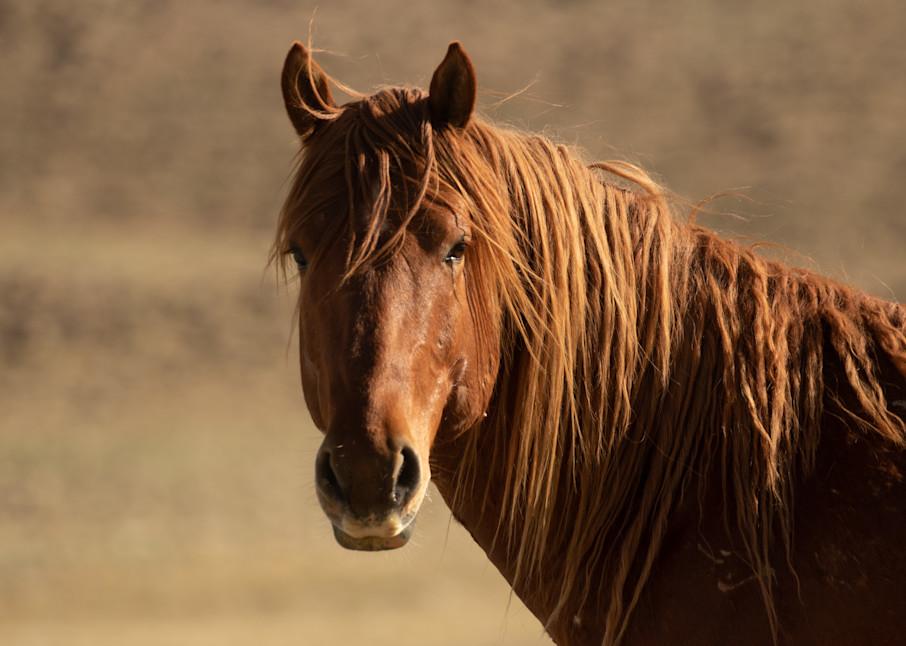 Onaqui Red Stallion Photography Art   Danehy Photography