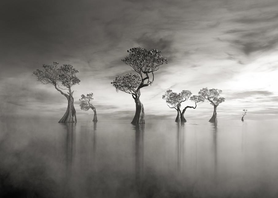 Harv Greenberg Photography - Coastal Splendor