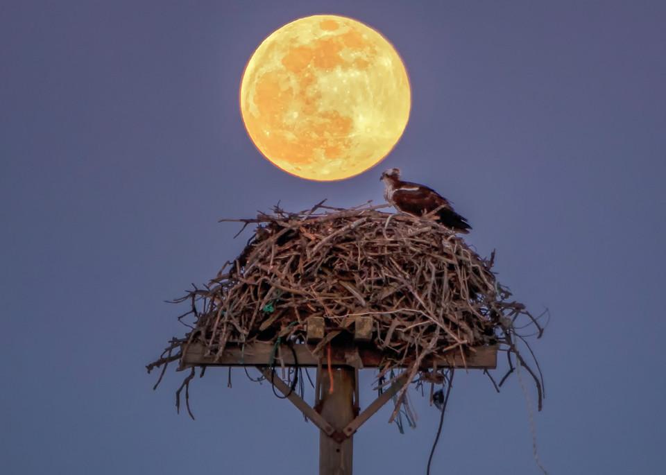 Osprey Moon Art | Michael Blanchard Inspirational Photography - Crossroads Gallery