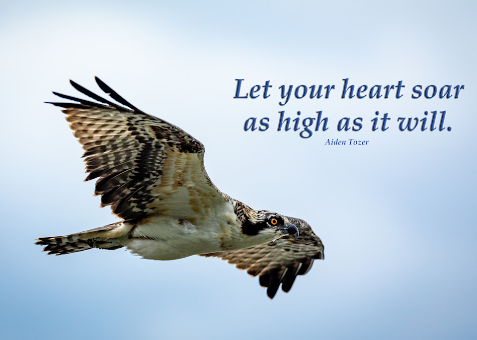 Let your heart soar as high as it will - Osprey