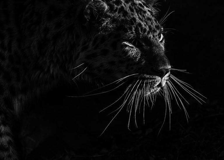 Darkness Art   TG Photo