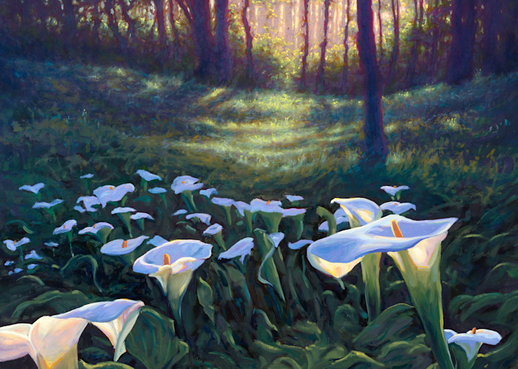 Glowing Calla Lilies