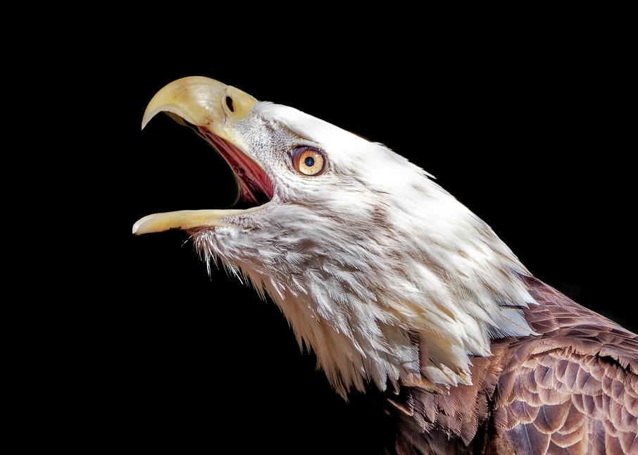 The Eagle Call