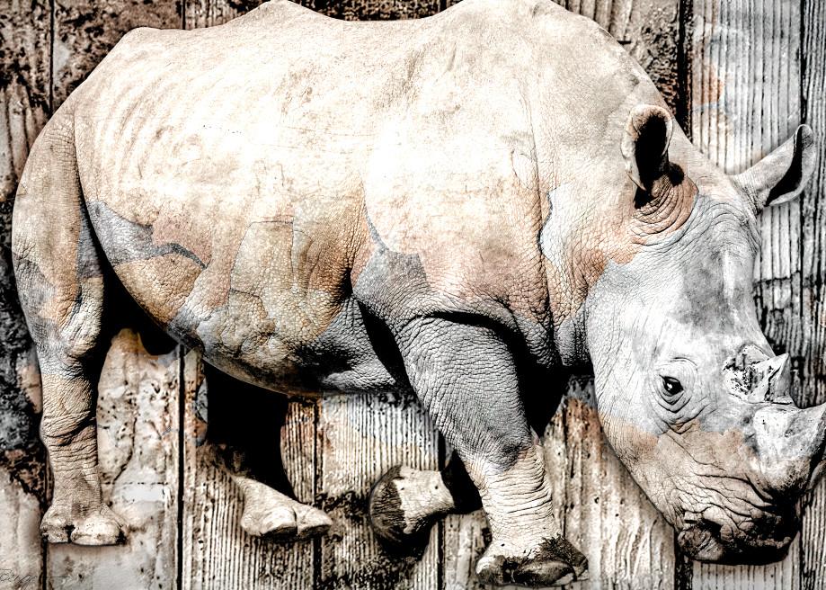 Rhino Montage (Kalahari), Montage, 2021 by artist Carolyn A. Beegan