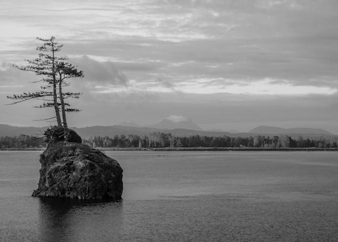 Two Trees on a Rock, Altoona, Washington, 2021