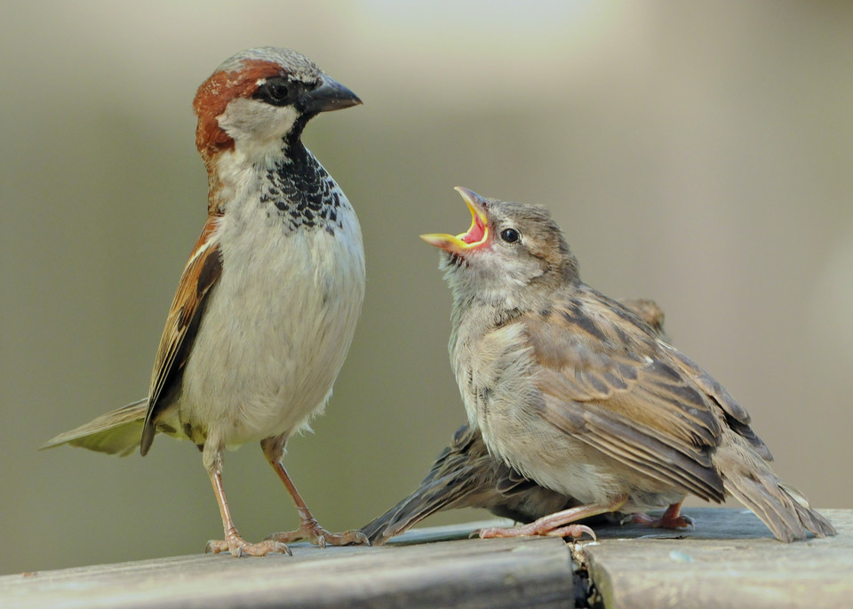 A Sparrow Spat Photography Art | Monteux Gallery