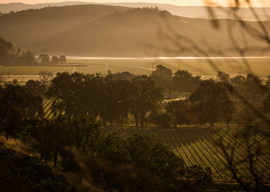 Moody vineyard landscape