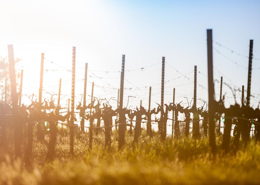 Warming dormant vines