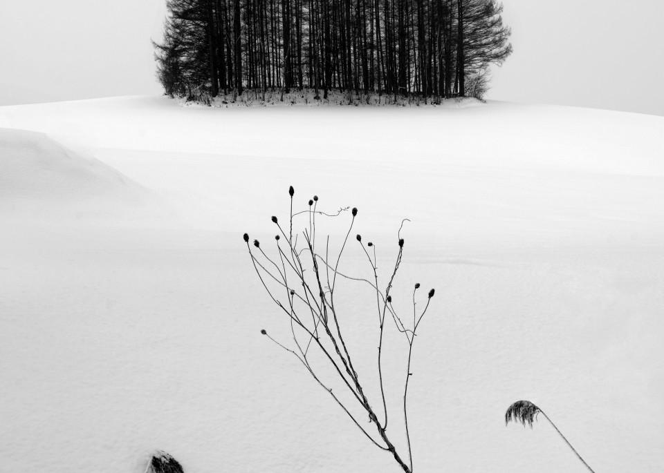 Image00117 Art | Roy Fraser Photographer