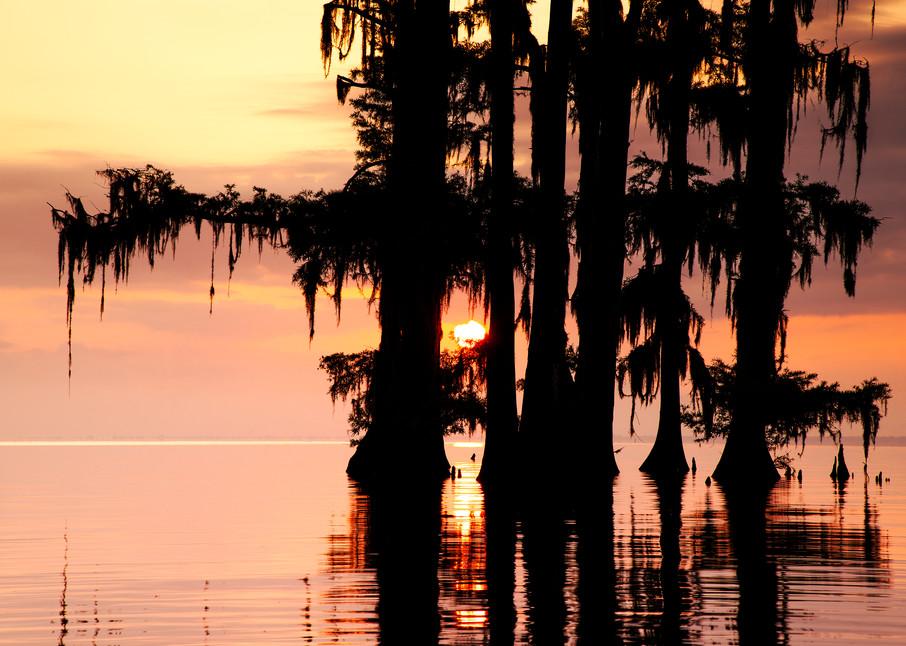 Sunrise through the  Cypress - Louisiana swamp fine-art photography prints