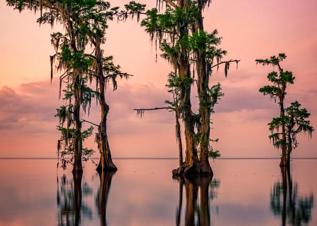 Pink Twilight on Lake Maurepas | Shop Photography by Rick Berk