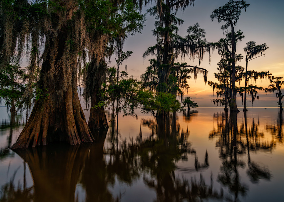 Dawn in the Swamp | Shop Photography by Rick Berk