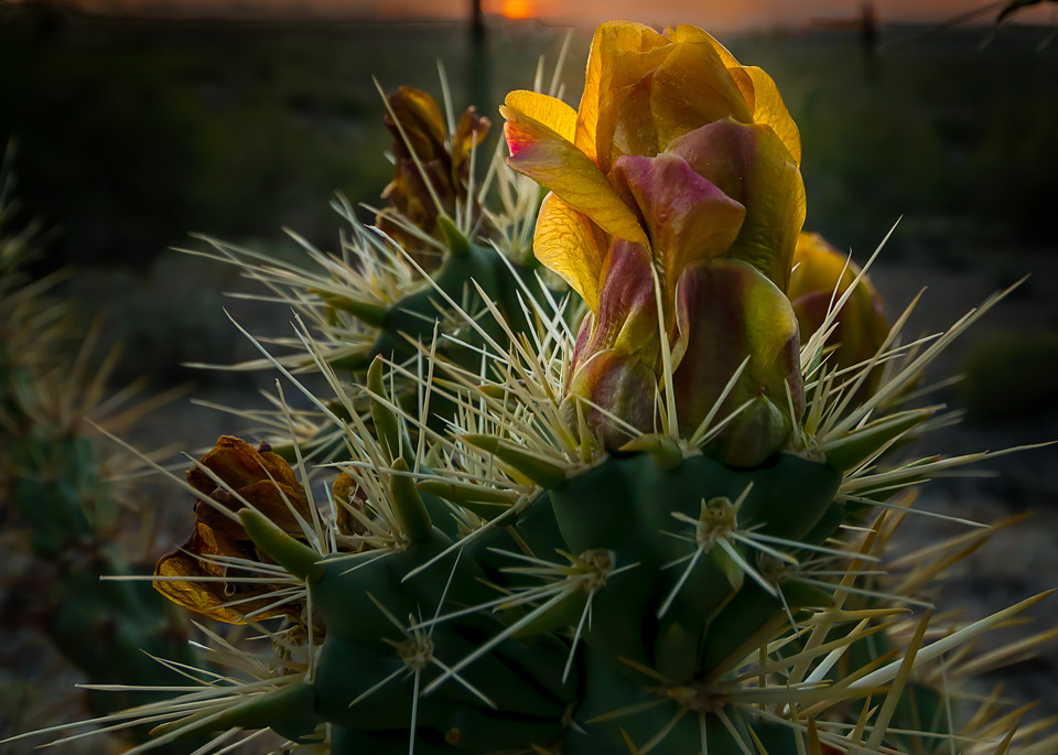 The Desert Rose Photography Art | Kendall Photography & Fine Art