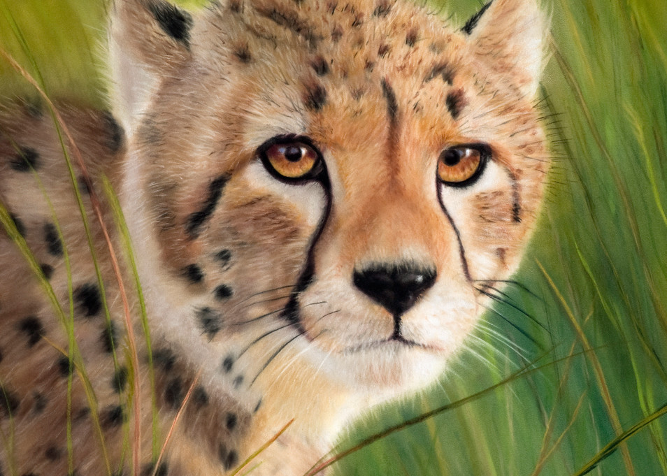 Cheetah painting Young Cheetah by Nancy Conant
