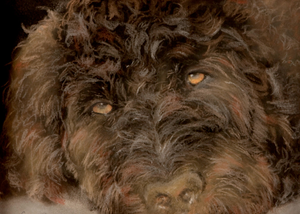 Goldendoodle painting, Emmah by Nancy Conant